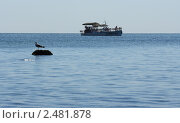 Катер в море. Стоковое фото, фотограф Atanas Dimitrov / Фотобанк Лори