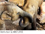 Купить «Два слона», фото № 2487310, снято 4 апреля 2011 г. (c) Морозова Татьяна / Фотобанк Лори