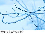 Изморозь на ветке дереве. Стоковое фото, фотограф Виктория Кононова / Фотобанк Лори
