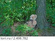 Плюшевый мишка потерялся в лесу. Стоковое фото, фотограф Мария Исаченко / Фотобанк Лори