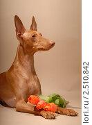 Чирнеко Дель Этна, портрет с цветами. Стоковое фото, фотограф Агибалова Кристина / Фотобанк Лори