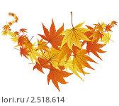 Осенние листья. Стоковая иллюстрация, иллюстратор Павел Коновалов / Фотобанк Лори