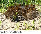 Бабочки. Стоковое фото, фотограф Скляров Игорь Сергеевич / Фотобанк Лори