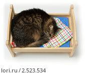 Купить «Кошка спит в маленькой кроватке», фото № 2523534, снято 28 марта 2011 г. (c) Антон Балаж / Фотобанк Лори