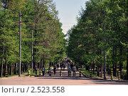 Лиственничная аллея — пешеходная улица (2011 год). Редакционное фото, фотограф Безрукова Ирина / Фотобанк Лори