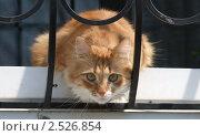 Кошка. Стоковое фото, фотограф Vladimir Kacher / Фотобанк Лори
