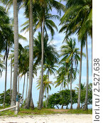Пальмы (2010 год). Стоковое фото, фотограф Баранов Александр / Фотобанк Лори