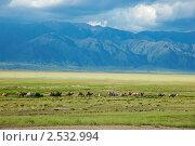 Купить «Караван верблюдов», фото № 2532994, снято 11 июля 2010 г. (c) Вадим Ралко / Фотобанк Лори
