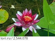 Цветок. Стоковое фото, фотограф Vasilii Olii / Фотобанк Лори