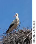 Купить «Аист в гнезде», фото № 2546338, снято 16 мая 2011 г. (c) Argument / Фотобанк Лори