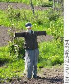 Купить «Пугало», фото № 2546354, снято 20 мая 2011 г. (c) Константин Кург / Фотобанк Лори
