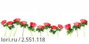 Бордюр из красных анемонов. Стоковое фото, фотограф Татьяна Белова / Фотобанк Лори