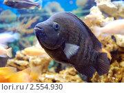 Аквариумная рыбка. Стоковое фото, фотограф Анна Омельченко / Фотобанк Лори