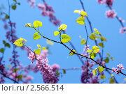 Цветение. Стоковое фото, фотограф Татьяна Зубкова / Фотобанк Лори