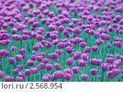 Купить «Тюльпаны», фото № 2568954, снято 21 мая 2011 г. (c) Pukhov K / Фотобанк Лори