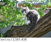 Купить «Домашний котенок в ошейнике сидит на стволе акации», фото № 2581438, снято 6 июня 2011 г. (c) Анна Мартынова / Фотобанк Лори