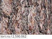 Кора дерева. Стоковое фото, фотограф Евгений Липский / Фотобанк Лори