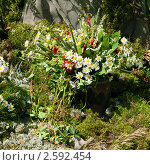 Купить «Фестиваль флористики «Цветень», композиция из ромашек на фоне природы», фото № 2592454, снято 4 июля 2010 г. (c) ElenArt / Фотобанк Лори