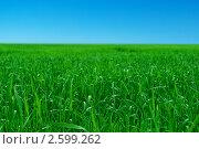 Купить «Утренняя роса на зеленой траве под голубым небом», фото № 2599262, снято 12 июня 2011 г. (c) Владимир Шеховцев / Фотобанк Лори