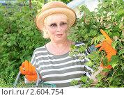 Купить «Женщина ухаживает за малиной», эксклюзивное фото № 2604754, снято 17 июня 2011 г. (c) Юрий Морозов / Фотобанк Лори