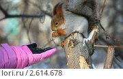 Купить «Белка ест семечки с ладони», видеоролик № 2614678, снято 14 февраля 2011 г. (c) Игорь Жоров / Фотобанк Лори