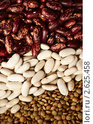 Фасоль и чечевица. Beans and lentils. Стоковое фото, фотограф Мария Исаченко / Фотобанк Лори