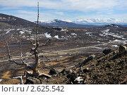Купить «Погибшее дерево на склоне сопки», фото № 2625542, снято 15 мая 2011 г. (c) Валерий Александрович / Фотобанк Лори