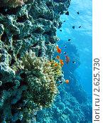 Купить «Подводный мир», фото № 2625730, снято 25 августа 2009 г. (c) Gennadiy Poznyakov / Фотобанк Лори