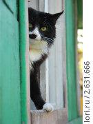 Купить «Кот выглядывает из дачного окна», эксклюзивное фото № 2631666, снято 23 июня 2011 г. (c) Куликова Вероника / Фотобанк Лори