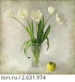 Белые тюльпаны. Текстурированный фон. Стоковое фото, фотограф Татьяна Малинич / Фотобанк Лори