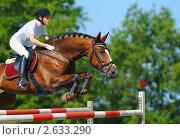 Купить «Конный спорт - молодая девушка прыгает на гнедой лошади через барьер», фото № 2633290, снято 9 августа 2009 г. (c) Абрамова Ксения / Фотобанк Лори