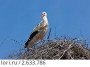 Купить «Аист в гнезде», фото № 2633786, снято 16 мая 2011 г. (c) Argument / Фотобанк Лори