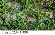 Купить «Талый снег на траве», видеоролик № 2641498, снято 10 мая 2011 г. (c) Михаил Коханчиков / Фотобанк Лори