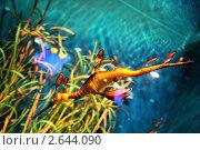 Морской житель. Стоковое фото, фотограф Клепова Светлана / Фотобанк Лори