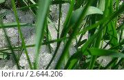 Купить «Талый снег на траве», видеоролик № 2644206, снято 11 мая 2011 г. (c) Михаил Коханчиков / Фотобанк Лори