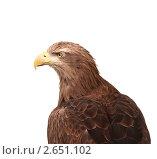 Купить «Орел на белом фоне», фото № 2651102, снято 7 июля 2011 г. (c) Андрей Павлов / Фотобанк Лори