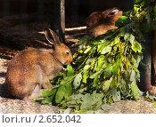 Два кролика и веник. Стоковое фото, фотограф Елена Бабаина / Фотобанк Лори