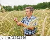Агроном в поле. Стоковое фото, фотограф Александр Романов / Фотобанк Лори