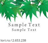 Купить «Кленовые листья», иллюстрация № 2653238 (c) Павел Коновалов / Фотобанк Лори