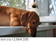 Кот и пёс. Стоковое фото, фотограф Дарина Бабий / Фотобанк Лори