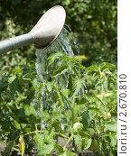 Купить «Полив растений», фото № 2670810, снято 6 июля 2008 г. (c) Антон Глущенко / Фотобанк Лори