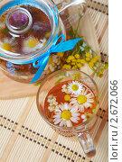 Купить «Ромашковый чай», фото № 2672066, снято 22 июля 2011 г. (c) Ольга Красавина / Фотобанк Лори