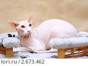Кот на лежанке. Стоковое фото, фотограф Марина / Фотобанк Лори
