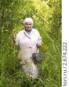 Бабушка с корзинкой и палкой в лесу. Стоковое фото, фотограф Светлана Кузнецова / Фотобанк Лори