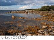 Купить «Каменистое побережье Белого моря», эксклюзивное фото № 2683234, снято 19 августа 2007 г. (c) Родион Власов / Фотобанк Лори