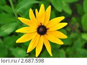 Желтый цветок. Стоковое фото, фотограф Еременко Наталья / Фотобанк Лори