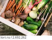 Купить «Урожай овощей в ящике в огороде, вид сверху», фото № 2692262, снято 18 июля 2011 г. (c) Светлана Зарецкая / Фотобанк Лори