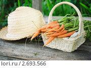 Купить «Морковь в корзинке и соломенная шляпа на скамейке в саду», фото № 2693566, снято 18 июля 2011 г. (c) Светлана Зарецкая / Фотобанк Лори