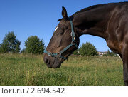 Лошадь с закрытым глазом. Стоковое фото, фотограф Дмитрий Жеглов / Фотобанк Лори