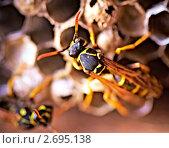 Купить «Осиное гнездо», фото № 2695138, снято 24 июля 2011 г. (c) Константин Тавров / Фотобанк Лори